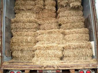 mulch hay